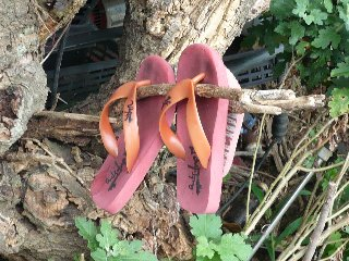 ビーチサンダルの木