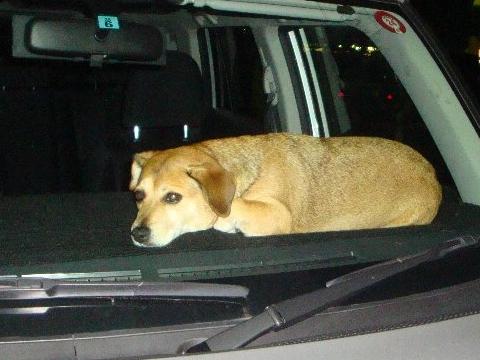 ダッシュボードの犬。